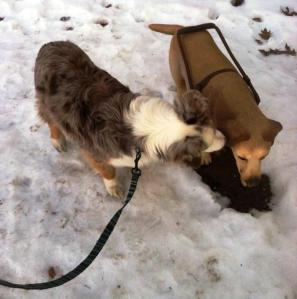 Real dog meets sculpted service dog