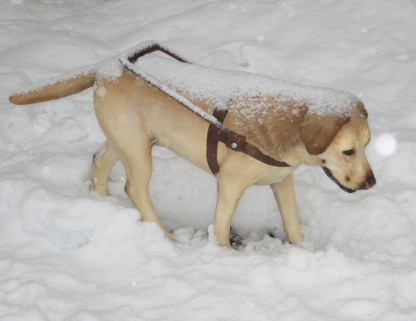"""""""Stray Dog"""" by Tony Matelli, Feb. 15, 2014"""