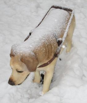service dog statue