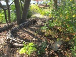 """View of """"Current"""" from Bikeway down toward Spy Pond"""