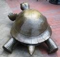 Tortoise July 2017